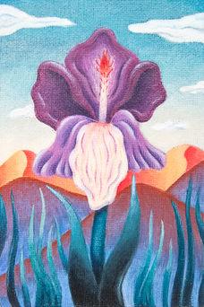 Purple Spearlily (𝙄𝙧𝙞𝙨 𝙘𝙤𝙣𝙨𝙘𝙞𝙚𝙣𝙩𝙞𝙖):