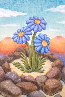 Baby Blue Cornflower (Echinacea somniabuntus)