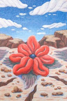 Red Snout (Rafflesia memoriae)