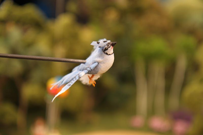zyrtec-bird