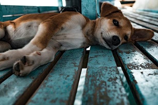 puppy-1149426__340.jpg
