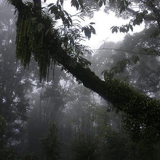 India 2011 Darjeeling (258)_edited.jpg