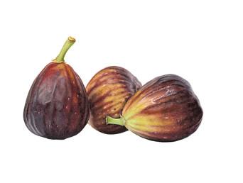 Figs 'Brown Turkey' watercolou