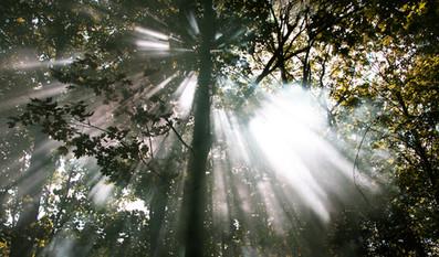 Light Beams, Thetford Forest, Norfolk