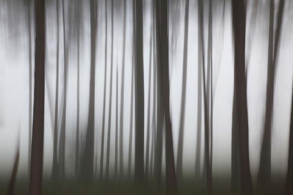 Forest Mist, Norfolk