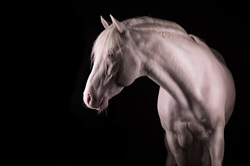 Glamour Horse Studio White