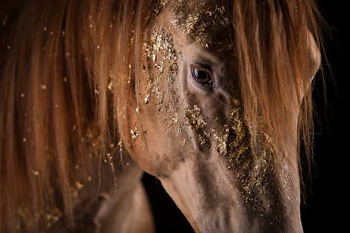 Glamour Horse Golden Dust