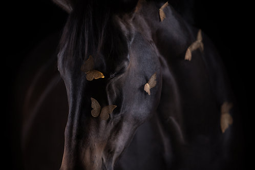 Glamour Horse Butterfly
