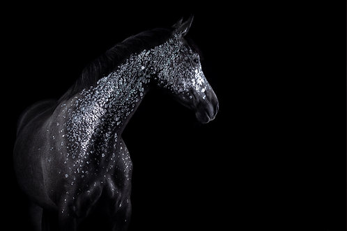 Glamour Horse Black & Silver
