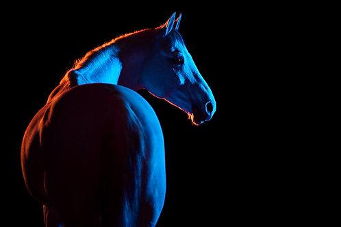 Colour Horse