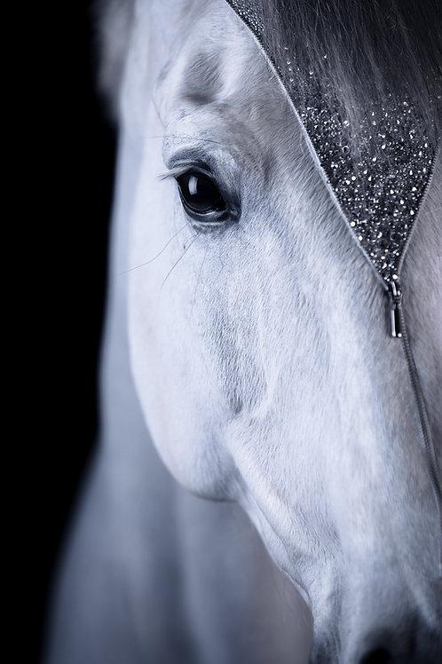Glamour Horse Zipper