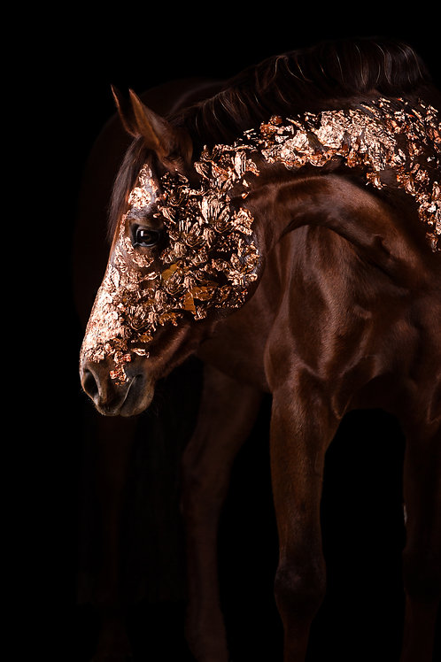 Glamour Horse Copper