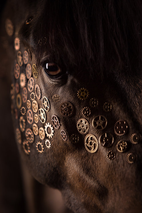 Glamour Horse Gears