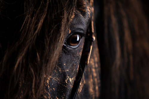 Glamour Horse Black Beauty