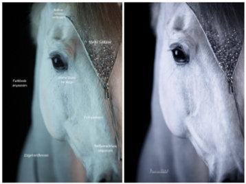 Webinaraufzeichnung - Bildbearbeitung für Pferdefotografen 2.0 - LR & PS