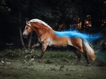 Webinaraufzeichnung - Einstieg in die Pferdefotografie