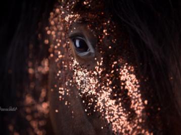 Webinaraufzeichnung - Kreativität in der Pferdefotografie