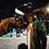 Thumbnail: Online Seminar - Pferde in Bewegung. Knackscharf + in Action