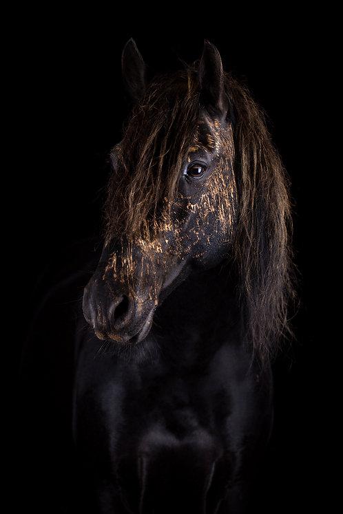 Glamour Horse Black Beauty