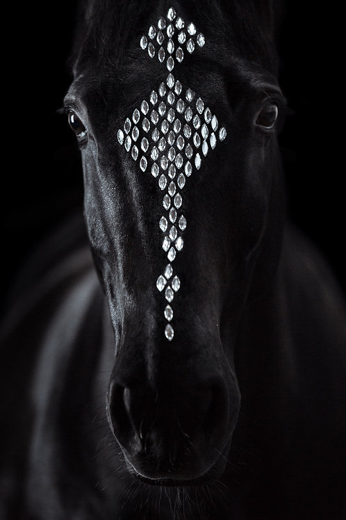 Glamour Horse Style