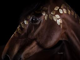 Seminaraufzeichnung - Schluss mit Ponyhof - Marketing für Tierfotografen