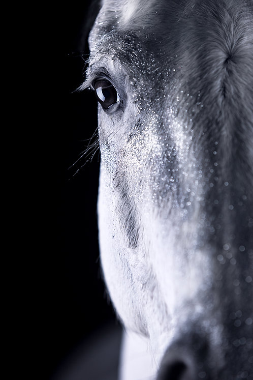 Glamour Horse Silver