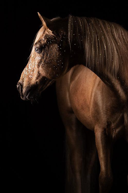 Glamour Horse Golden Glitter