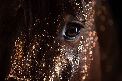Glamour Horse Red Glitters