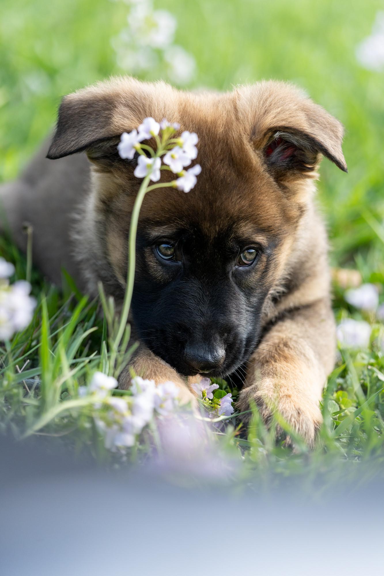 Hunde-7.jpg