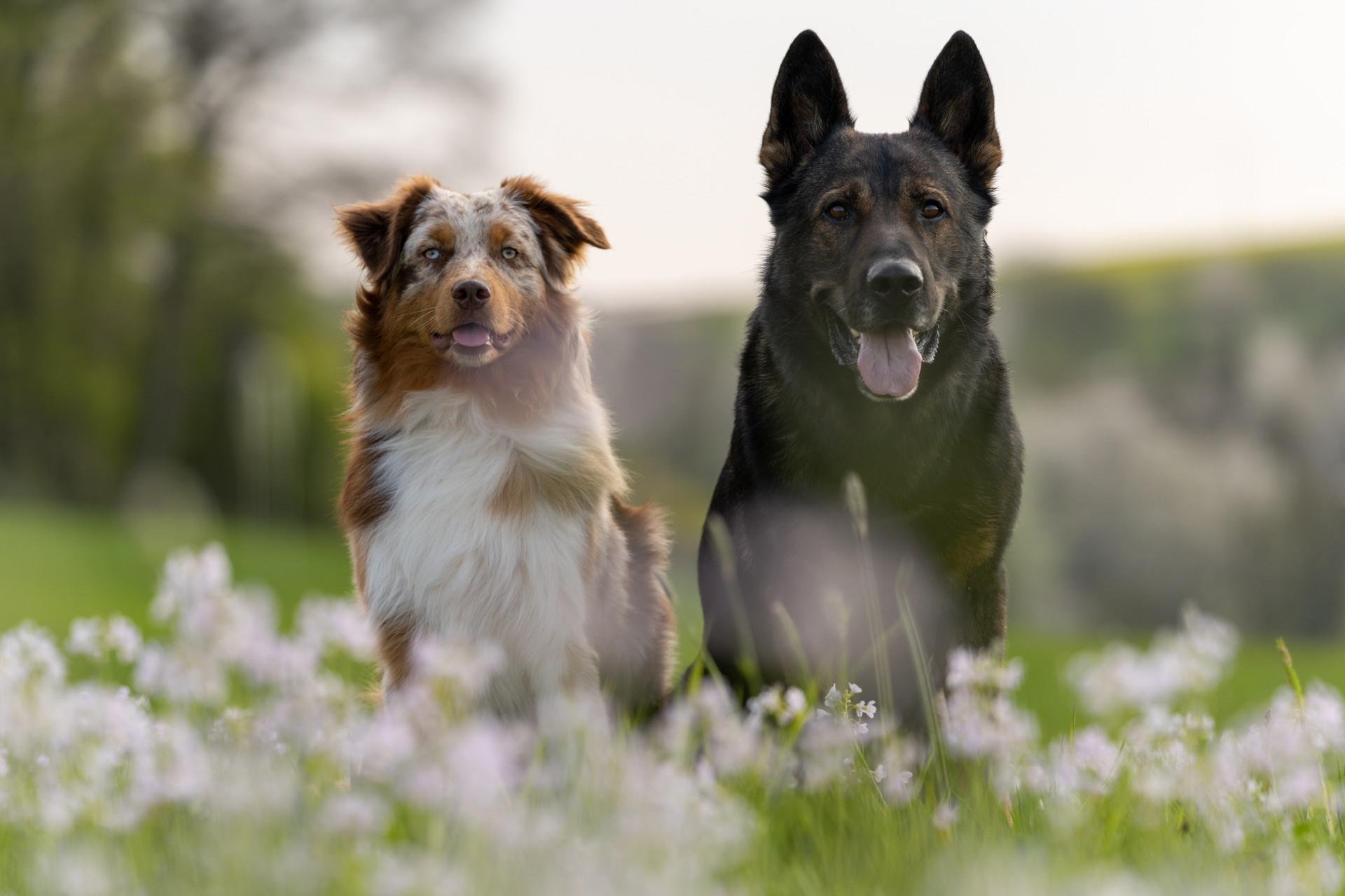 Hunde-9.jpg