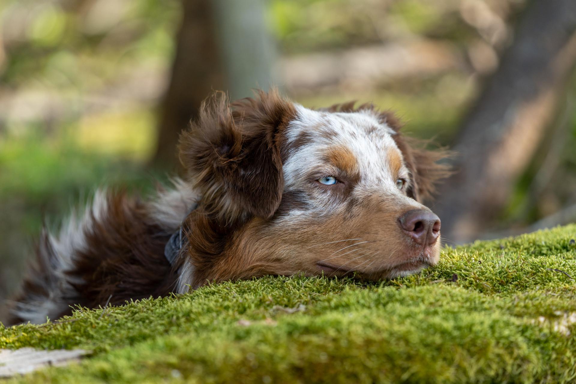 Hunde-4.jpg