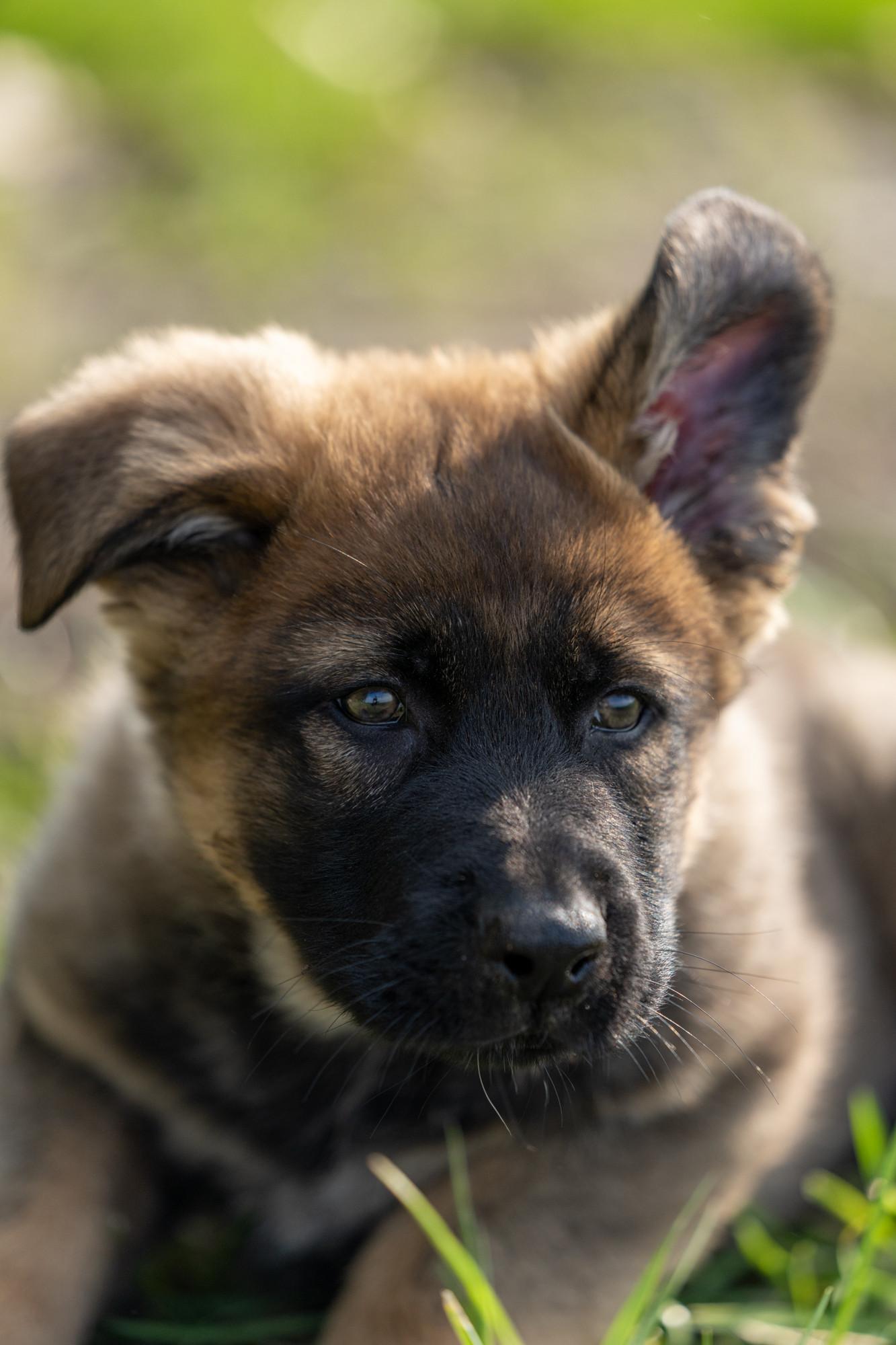 Hunde-3.jpg