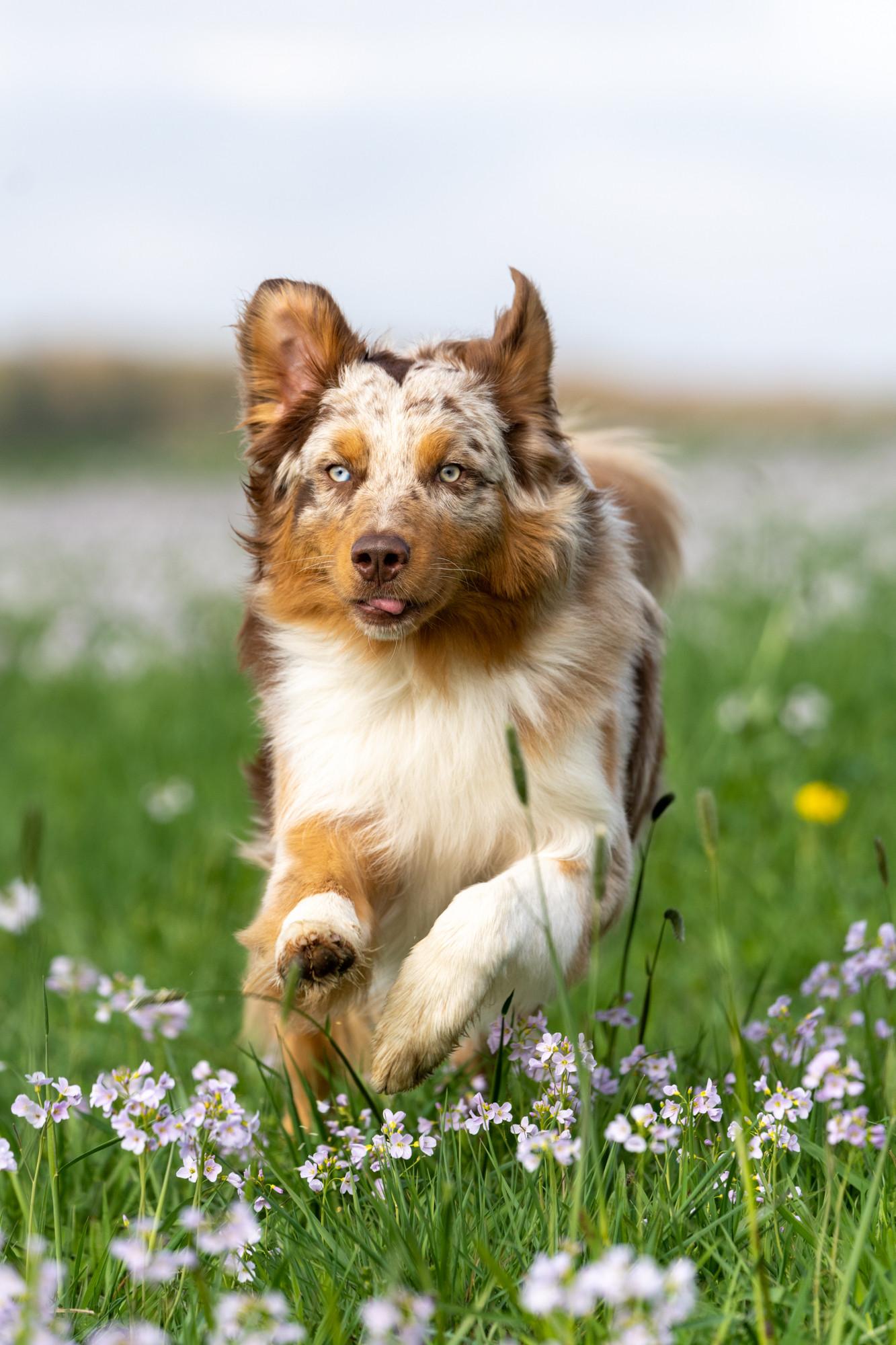 Hunde-8.jpg