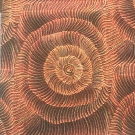 Indigenous Shells