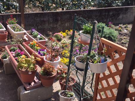 ウエルカムガーデンに春が来ました!