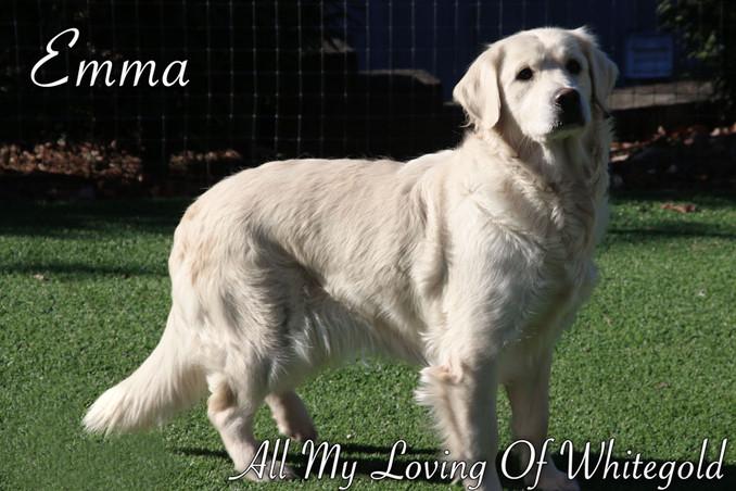 emma_our_dog_008.jpg