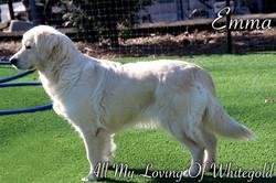 emma_our_dog_005