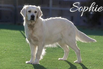 Sophie_03.jpg