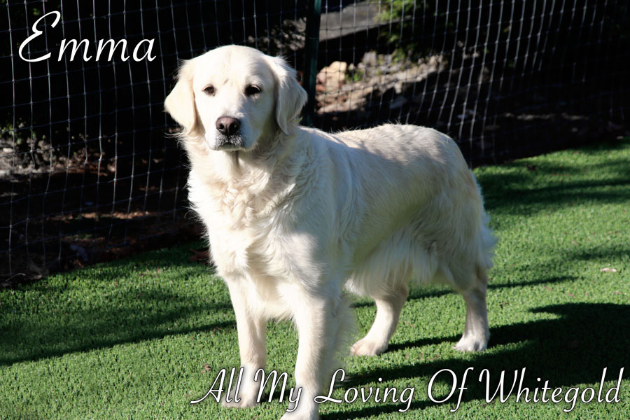 emma_our_dog_004