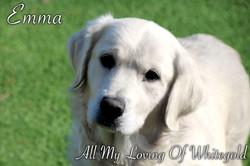 emma_our_dog_002