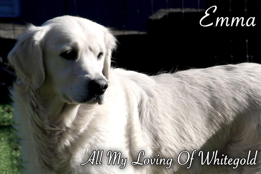 emma_our_dog_006