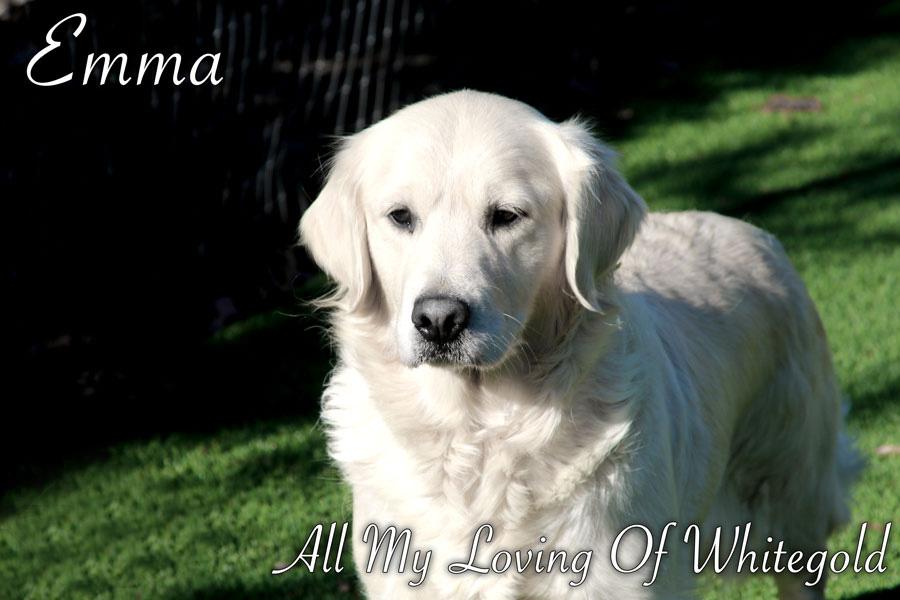 emma_our_dog_003