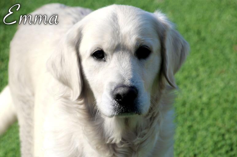emma_our_dog_001