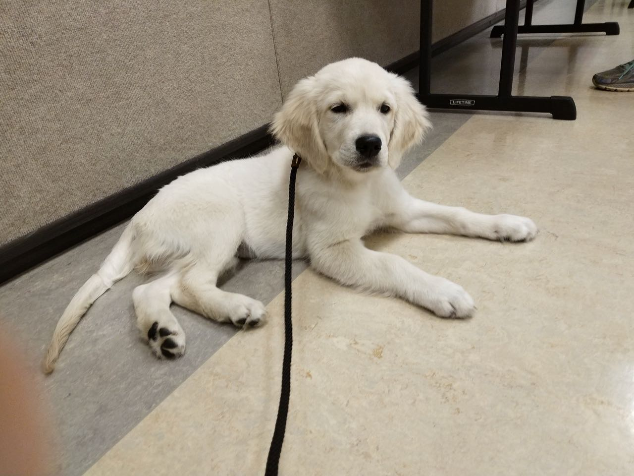 Molly's First Day Puppy Kindergarten
