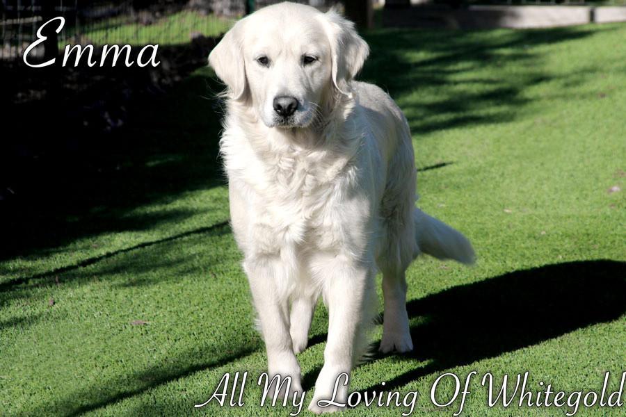 emma_our_dog_009.jpg