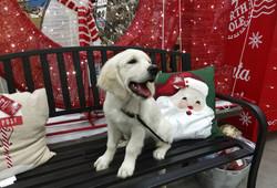 Molly_christmas_s