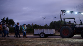 Armando Zepeda and his team of Grape pickers on the way to a morning harvest, Photo from ESFUERZO a short documentary.jpg