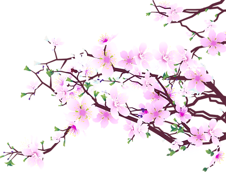 cherry-blossom-45487_edited_edited.png