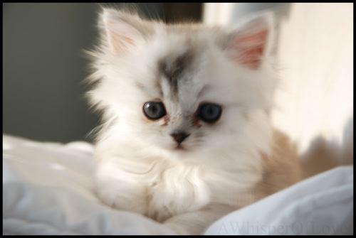 Primeros cuidados al adoptar a un gato