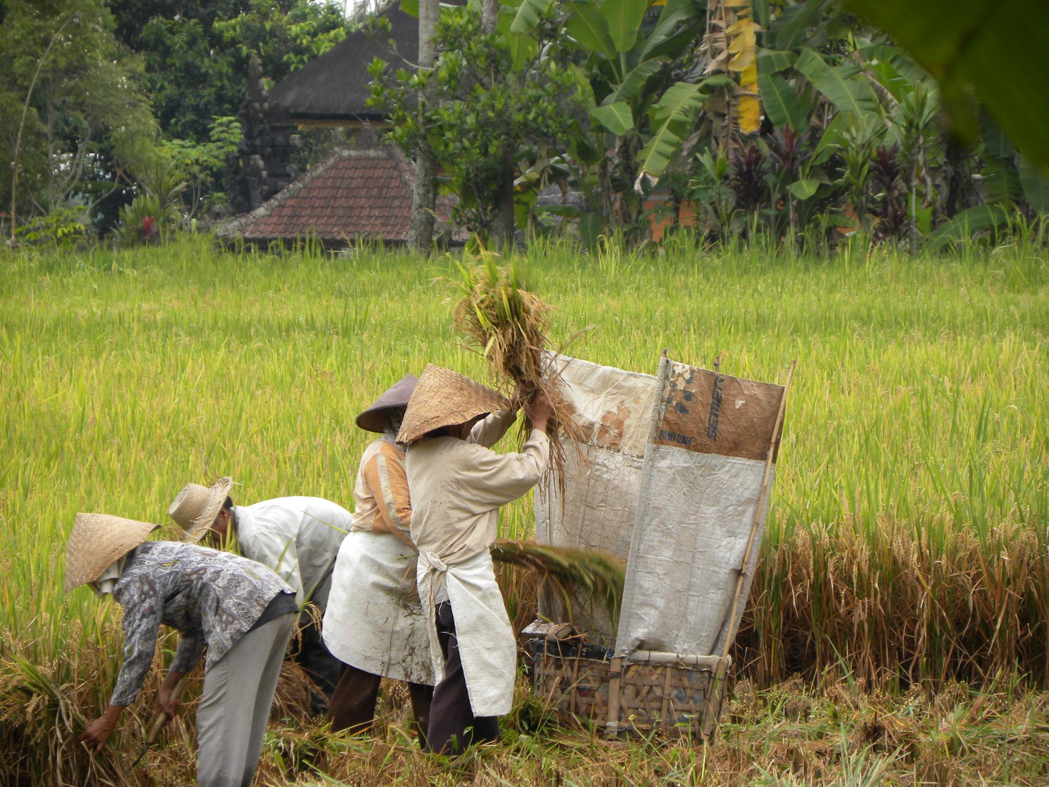Decouvertes des rizieres